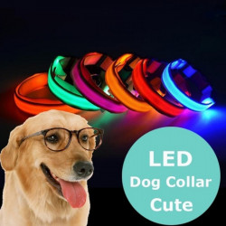 Collare Per Cani Fluorescente A LED